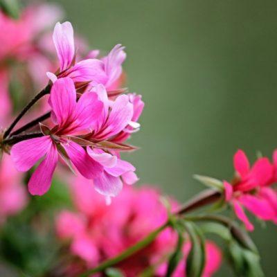 Blomsterduft og en vennlig tanke