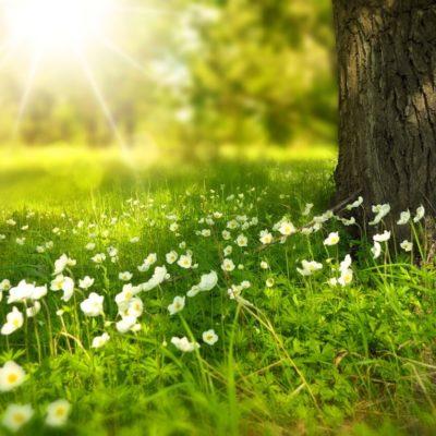 God folkehelse og rent miljø